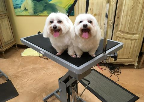 The pampered pet venus de fido coupons in palm desert pet everything we do is designed with your comfort and satisfaction in mind we look forward to serving you and your pet solutioingenieria Images