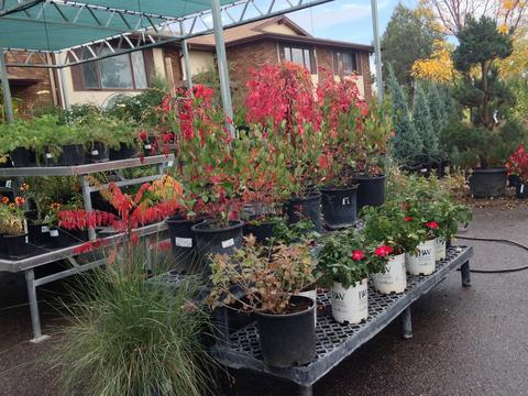 Harmony Gardens Coupons In Fort Collins Landscaping Localsaver