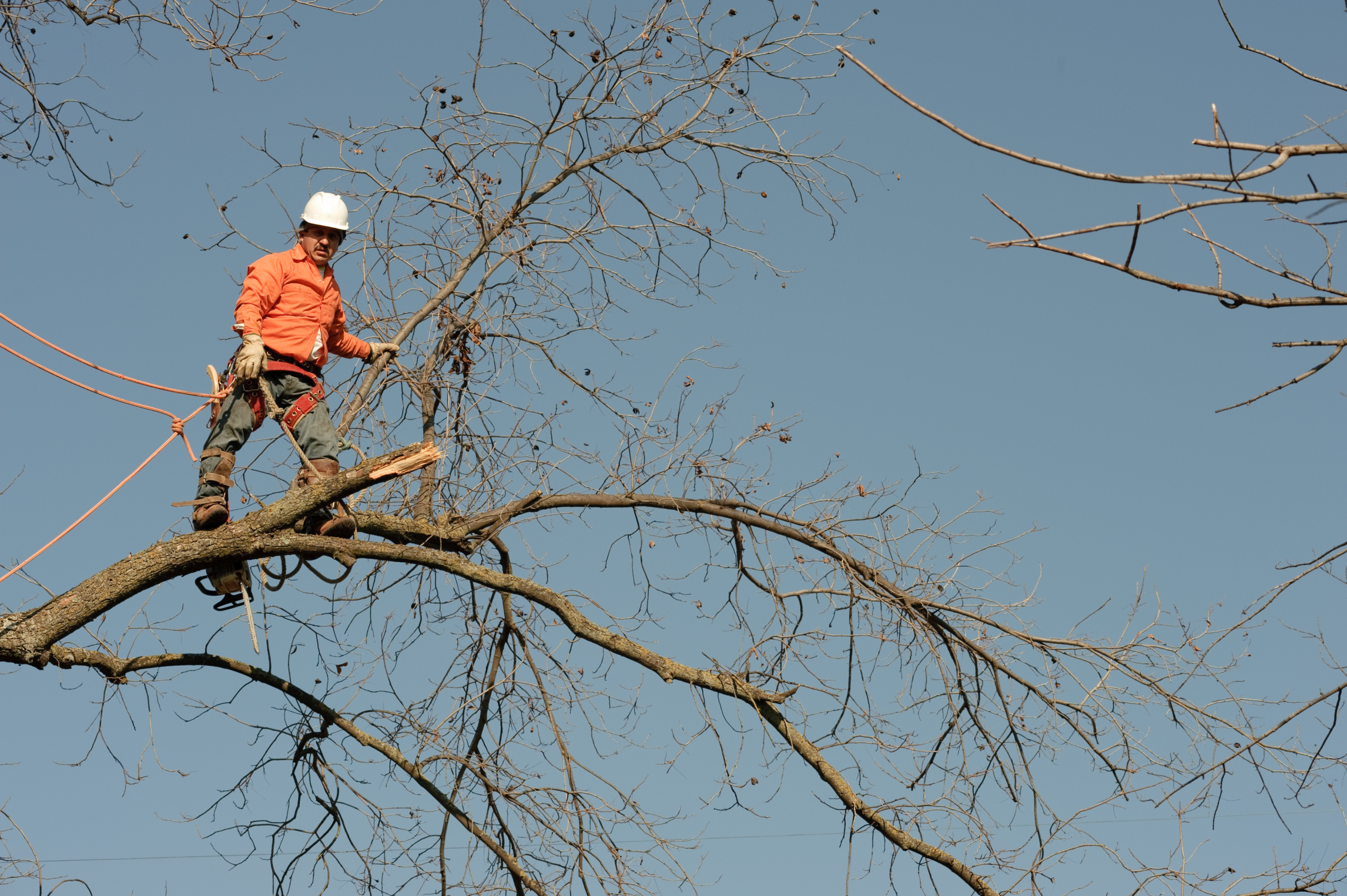 Rawls Tree Service Offers The Following Danger Removal Limbing Topping Chipping Cleanup Timber Falling Marketing Stump