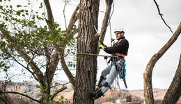 Broomfield Tree Trimming and Removal