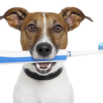 Palm Harbor Teeth Cleaning
