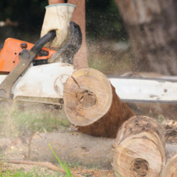 Baytown Tree Service and Trimming