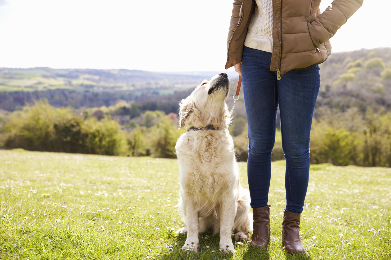 Image result for Pet Sitting istock