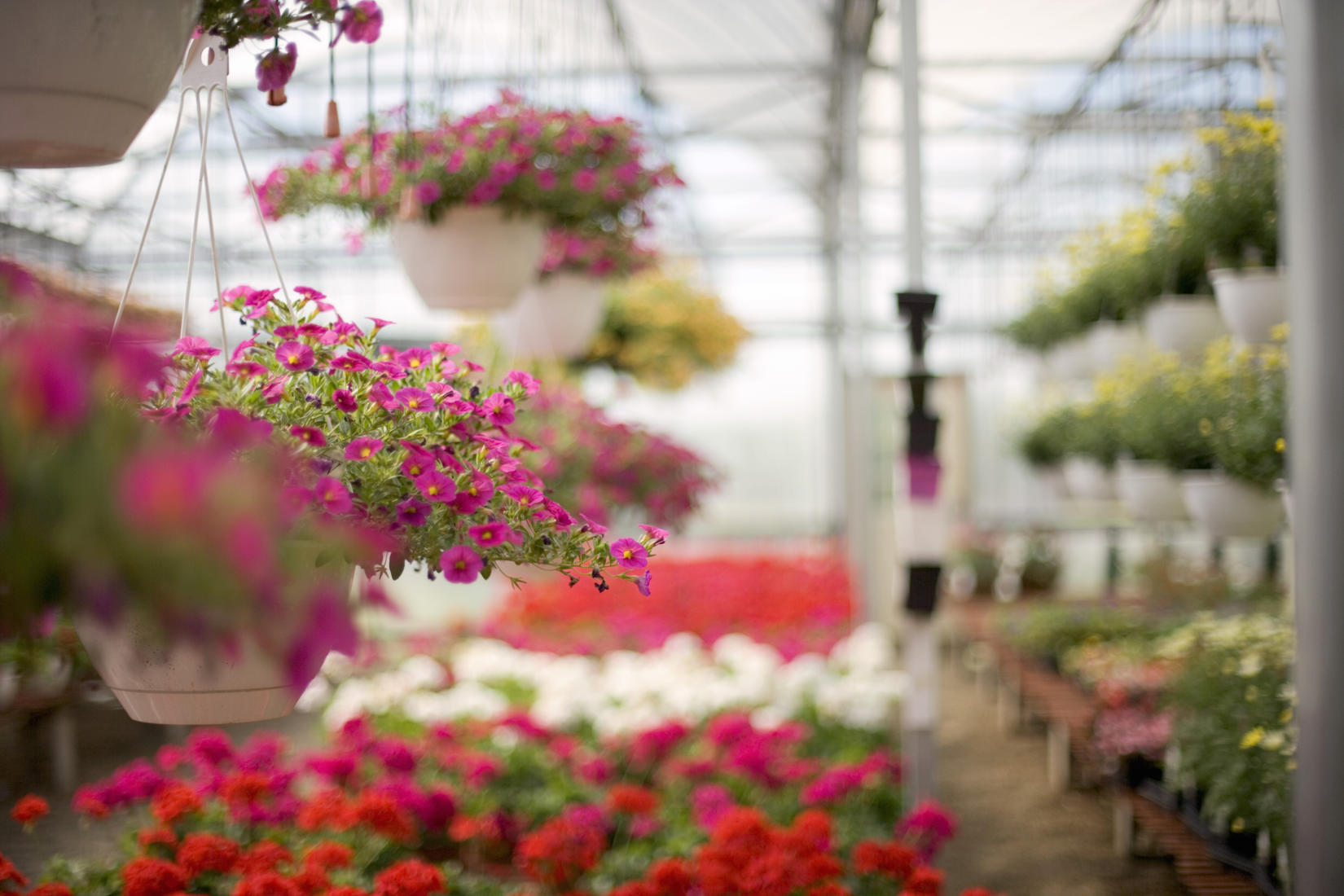 The greenhouse wills point tx