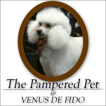 The pampered pet venus de fido coupons in palm desert pet sign up for coupons solutioingenieria Images